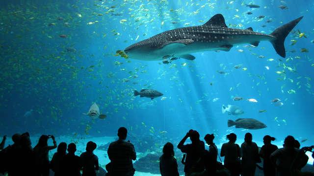 Découvrez le Grand Aquarium de Saint-Malo !