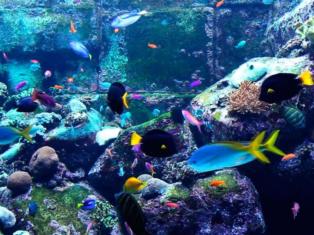 Séjour Ile-et-Vilaine - Week-end découverte de la cité corsaire avec entrée au Grand Aquarium de St-Malo  - 3*