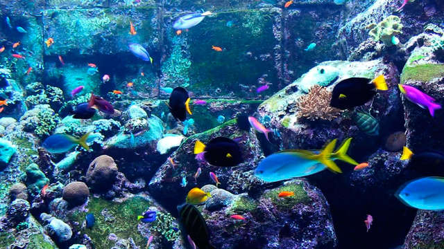 Descubre Saint-Malo con entrada al Grand Aquarium