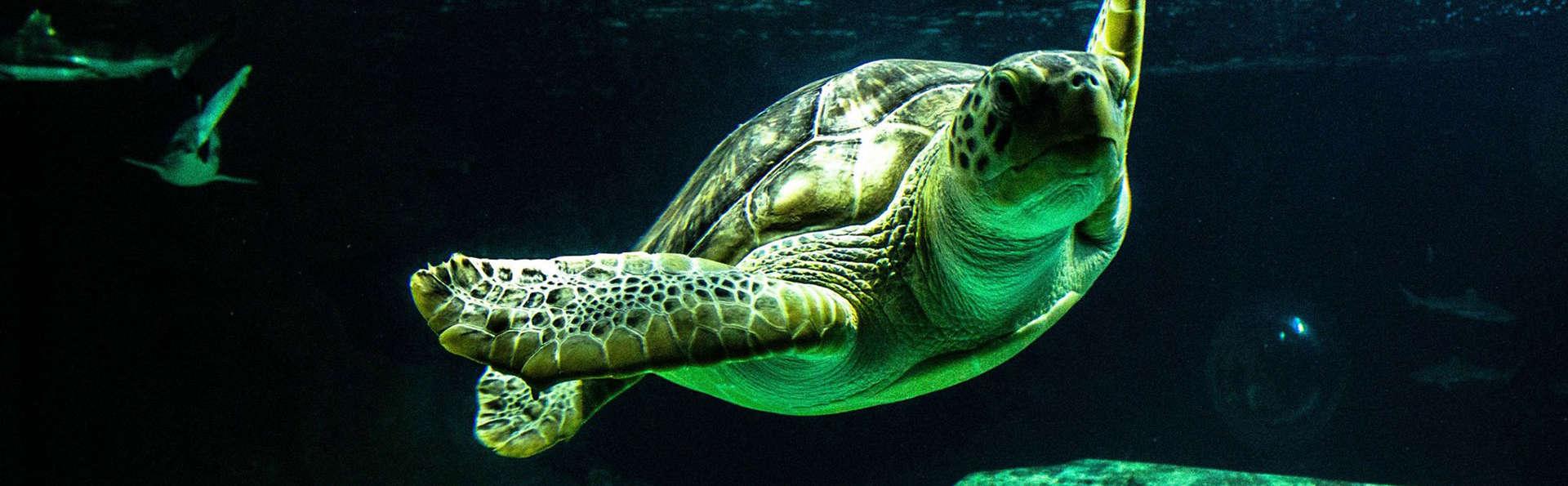Escapade en bord mer au Pouliguen et visite de l'Océarium du Croisic