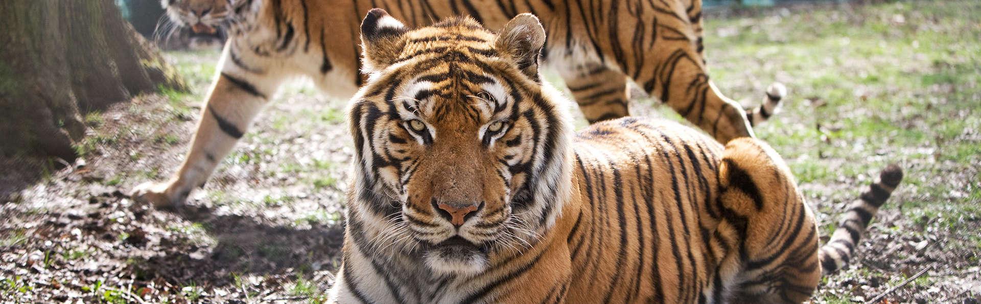 Séjournez près de Versailles et venez découvrir le Zoo de Thoiry