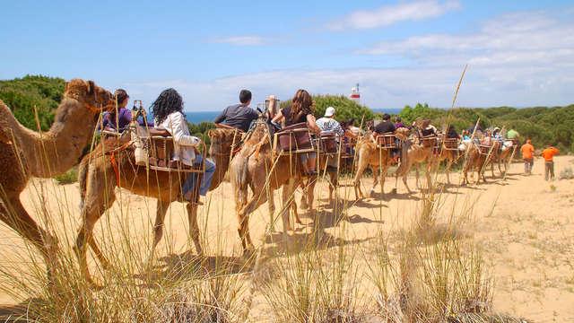 1 Paseo en camello para 2 adultos