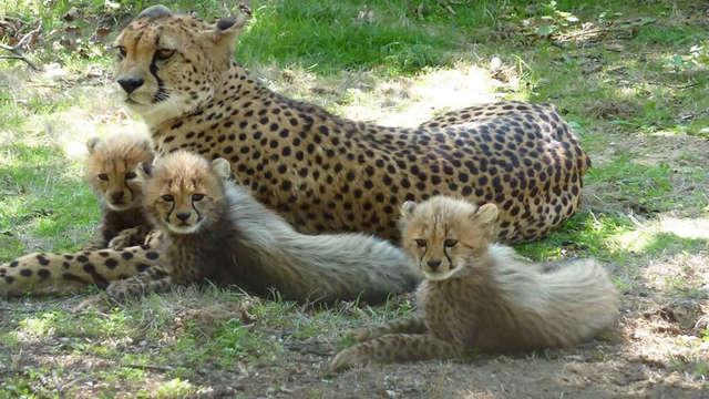 Partez à la découverte d'un parc animalier en famille, au cœur de la Drôme