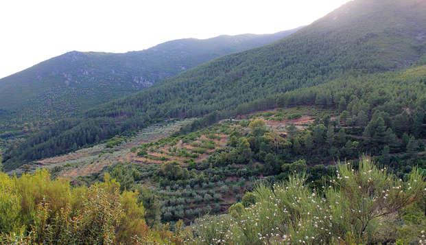 Escapada Relax en la provincia de Salamanca con visita a un olivar, cata de aceite y acceso al Spa