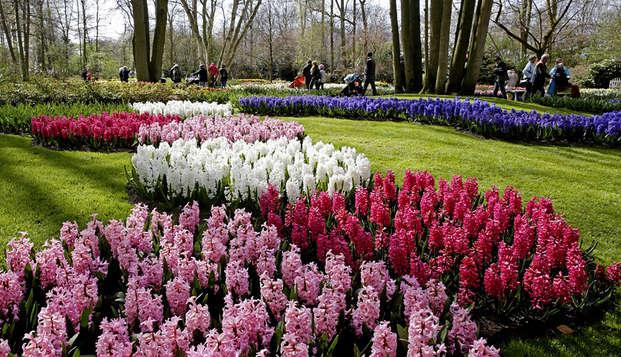 Relájate con el florecer en Keukenhof (desde 2 noches)