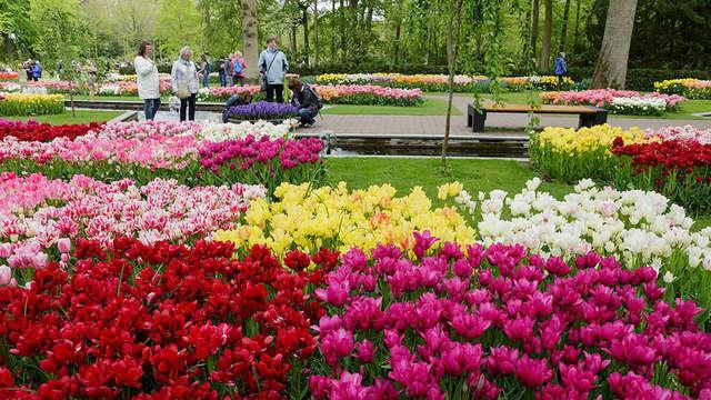 Profitez du design, du bien-être et de la beauté des fleurs à Keukenhof