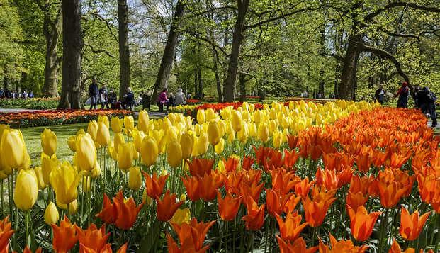 Admirez les célèbres fleurs du Keukenhof lors d'un séjour confortable à Amsterdam