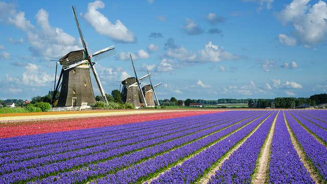 Citytrip à Amsterdam et promenade à vélo jusqu'au parc floral de Keukenhof (2 nuits)
