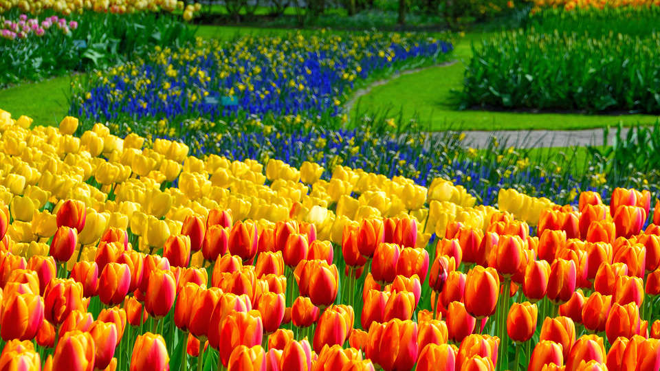Carlton Beach - edit_Keukenhof23.jpg