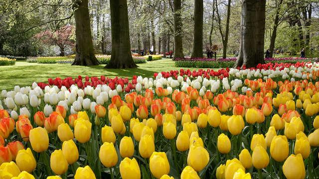 Descubre Ámsterdam y visita el parque Keukenhof