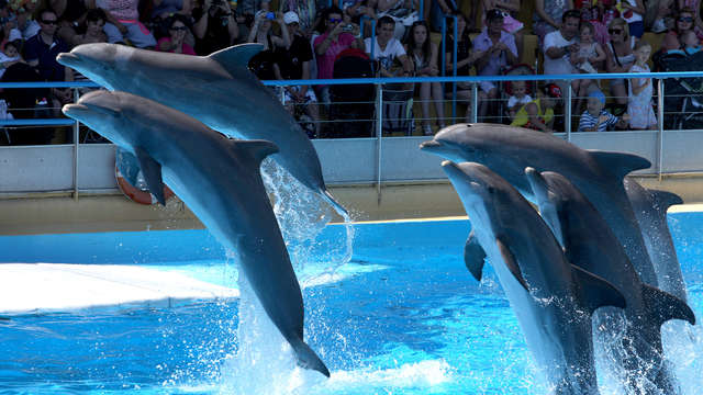 Hotel Spa Baie des Anges by Thalazur - dolphins