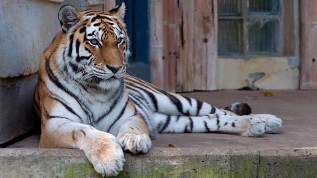 Beleef een magische dag in de Zoo van Antwerpen (2 nachten)