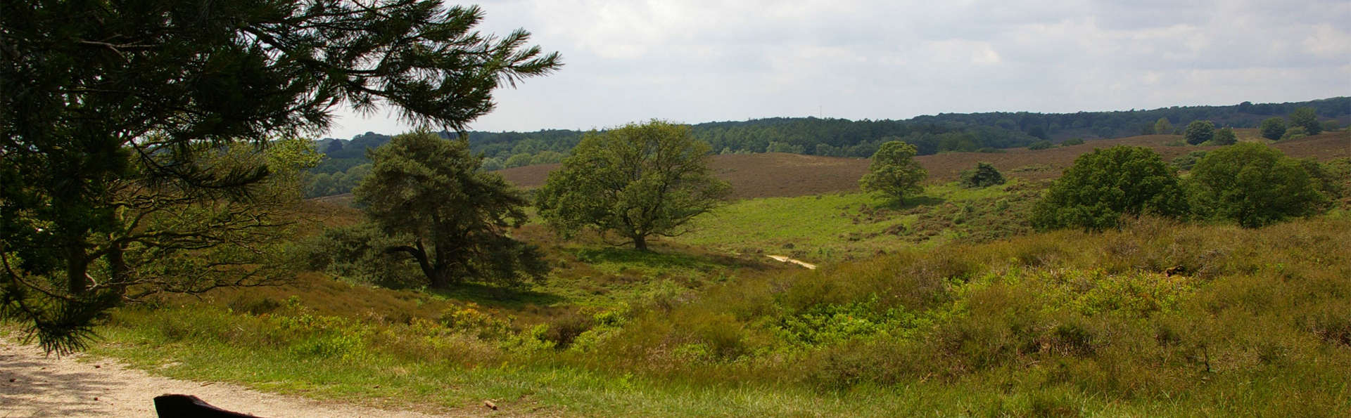 Fletcher De Buunderkamp - edit_veluwe.jpg