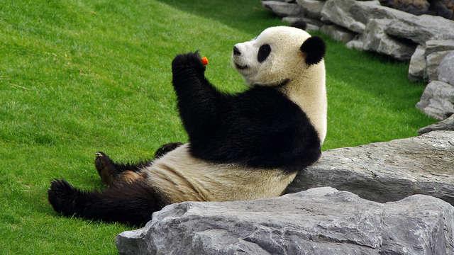 Ontspan en bezoek het magische dierenpark Pairi Daiza