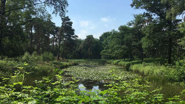 Landgoed Kapellerput - Kapellerput landgoed