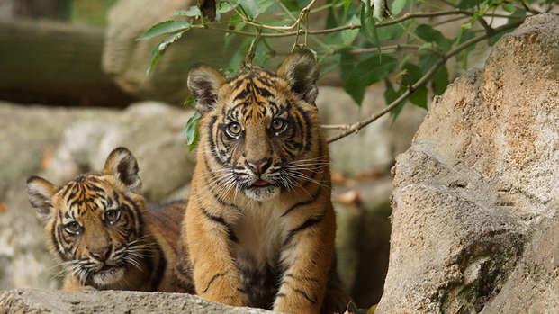 Descubre el ZooParc de Beauval en familia