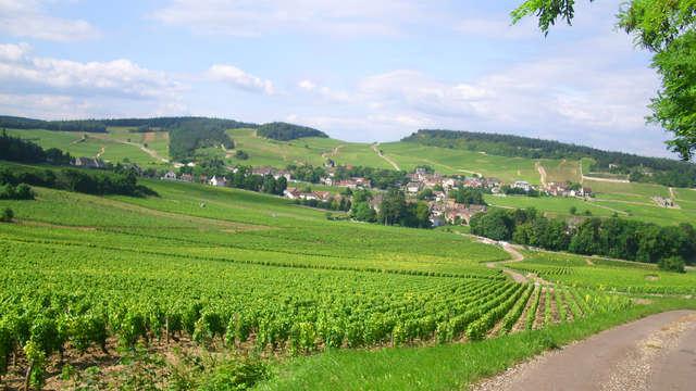 Dépaysement dans la capitale des vins de Bourgogne