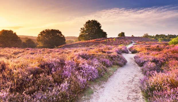 Betoverende natuur, fietsroutes en massage in de prachtige Veluwe te Gelderland (vanaf 2 nachten)