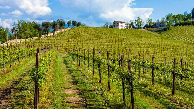 Séjour avec dégustation à la cave Bisol dans les collines de Prosecco di Valdobbiadene !