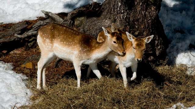 1 Entrée au Parc Animalier Naturlandia pour 2 adultes