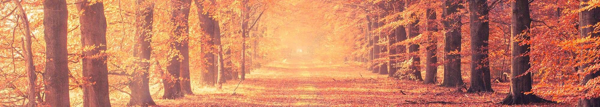 Weekendje weg Herfstvakantie voor min. 2 nachten