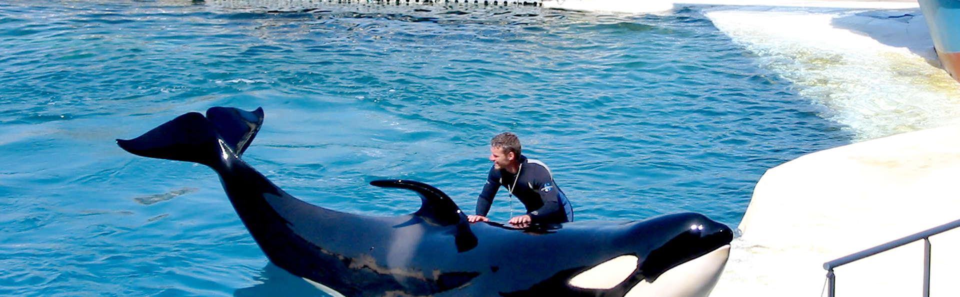Bewonder de dolfijnen en otters van Marineland! (vanaf 2 nachten) (vanaf 2 nachten)
