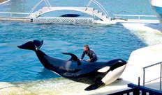 1 Entrée au Parc Aquatique Marineland pour 2 adultes