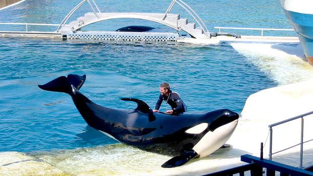 À la découverte des animaux marins à Marineland !