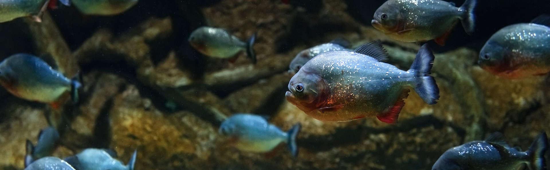 Masque et tuba entre les poissons tropicaux avec toute la famille (à partir de 2 nuits)