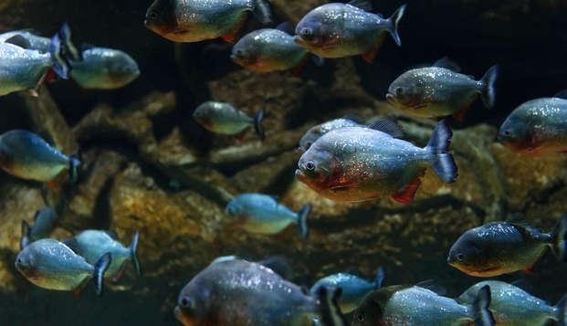 ¡Sumérgente entre peces tropicales en familia! (desde 2 noches)