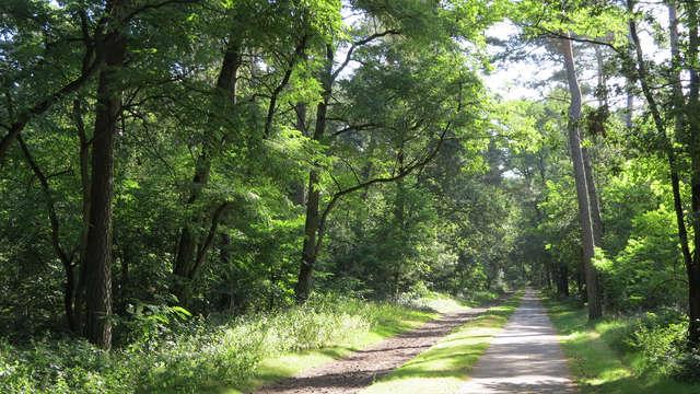 Profitez en Brabant : randonnées à pieds ou à vélo et de délicieux plats de saison