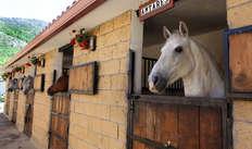 Visita los establos de caballos y aprende todo sobre ellos para 2 adultos