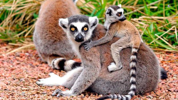 Visita con tu familia el zoo Pairi Daiza