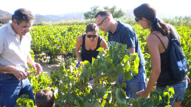 Alojamiento en el Empordá y visita con cata de vinos y aceite de la zona