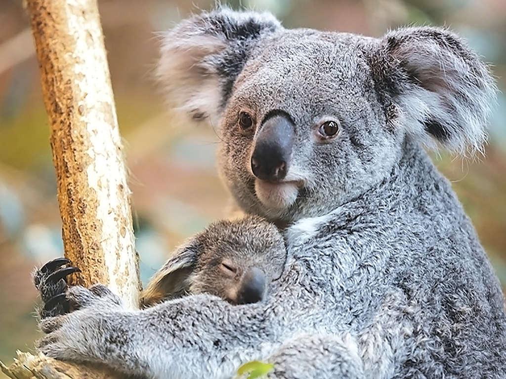 Séjour Amboise - Découverte du zoo de Beauval en famille  - 3*