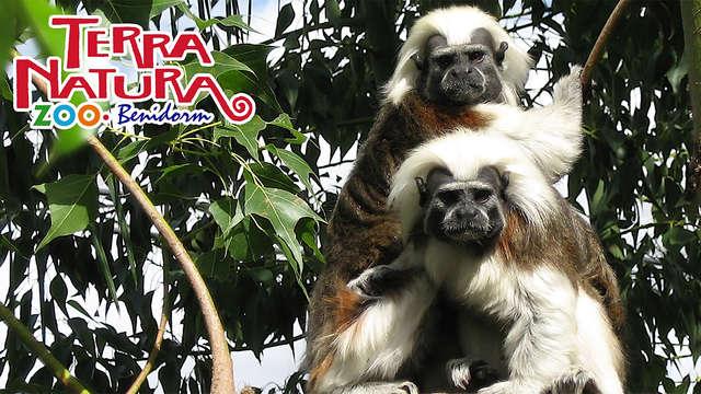 Escapada con entradas para el ZooParc Terra Natura, cava y salida tardía en Murcia