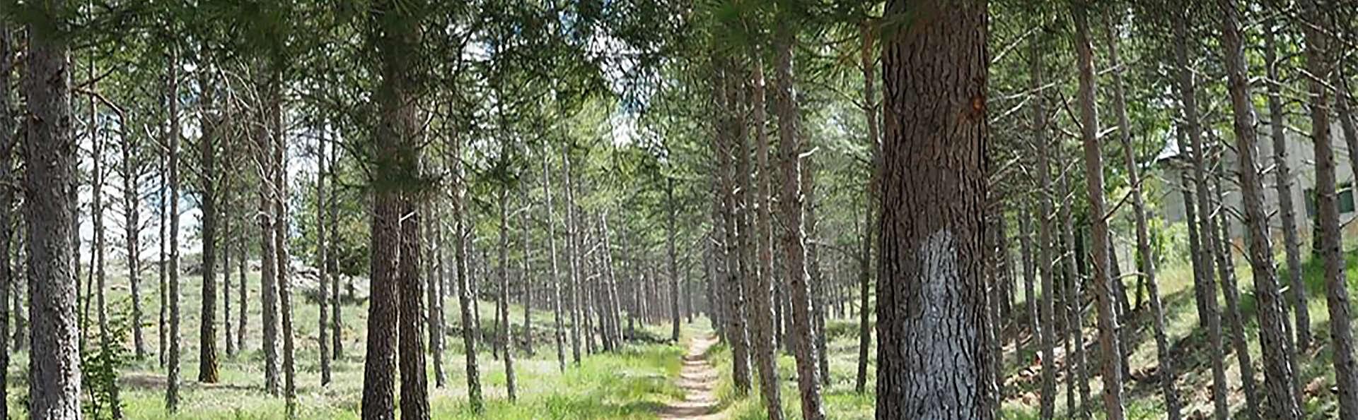 Hotel II Virrey  - EDIT_forest.jpg