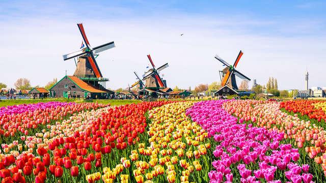 Geniet in een deluxe kamer in Zaandam, nabij Amsterdam