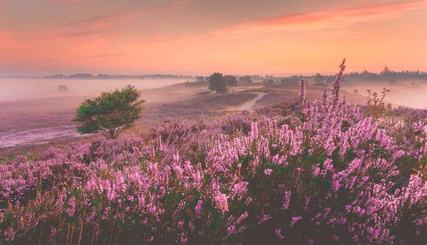 Uitwaaien in een van de mooiste natuurgebieden: de Veluwe