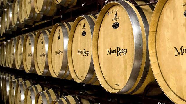Wijntoerismespecial: bezoek de wijngaarden en neem deel aan de proeverij in Belmonte