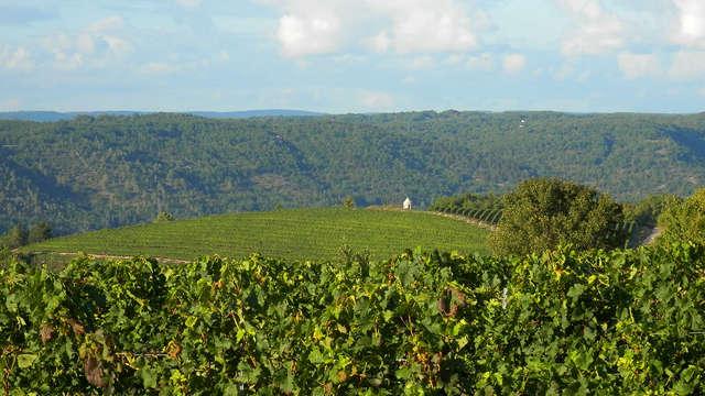 1 Dégustation de vins dans la cave du Clos Triguedina pour 2 adultes