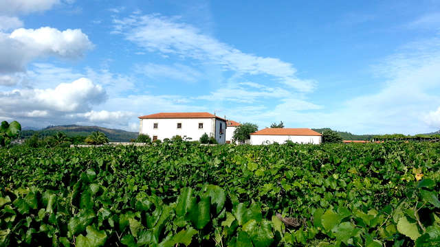 Escapada gastronómica con degustación de vino en el norte de Portugal (desde 2 noches)