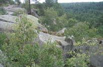 Forêt de Fontainebleau -