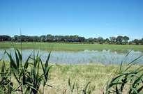 Parc naturel régional de Camargue -