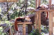 Zoo de la Palmyre -