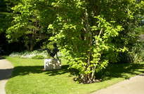 Arboretum Gaston-Allard -