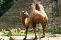 Parc zoologique d'Amnéville -