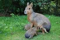 Zoo d'Asson -