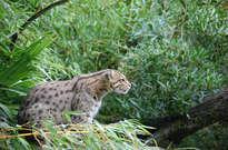 Parc zoologique de Bordeaux Pessac -