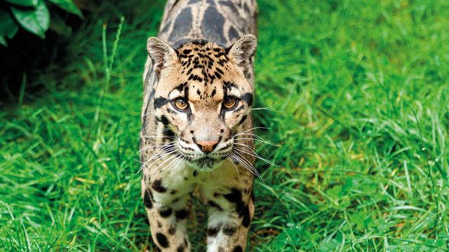 Venez profitez de la nature au Zoo de Bourbansais